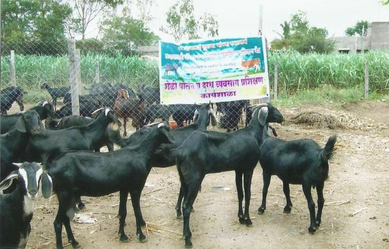 goat farming business plan in hyderabad